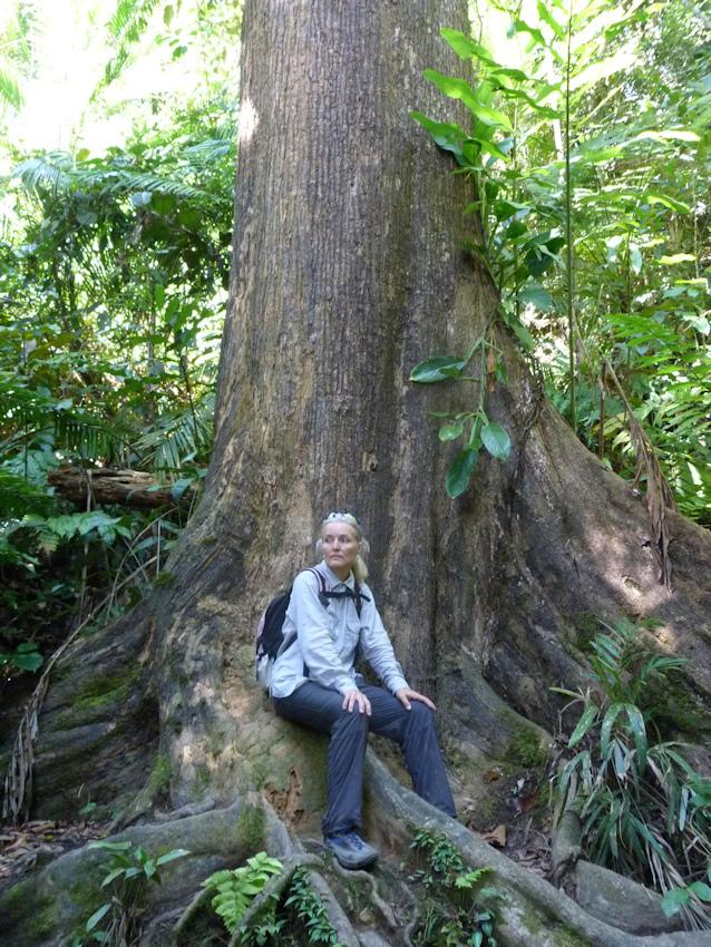 Meine Begegnung mit Jacky im Urwald auf Borneo