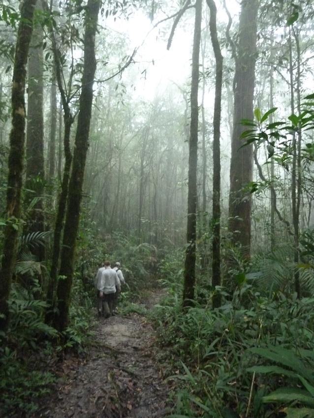 im Urwald auf Borneo
