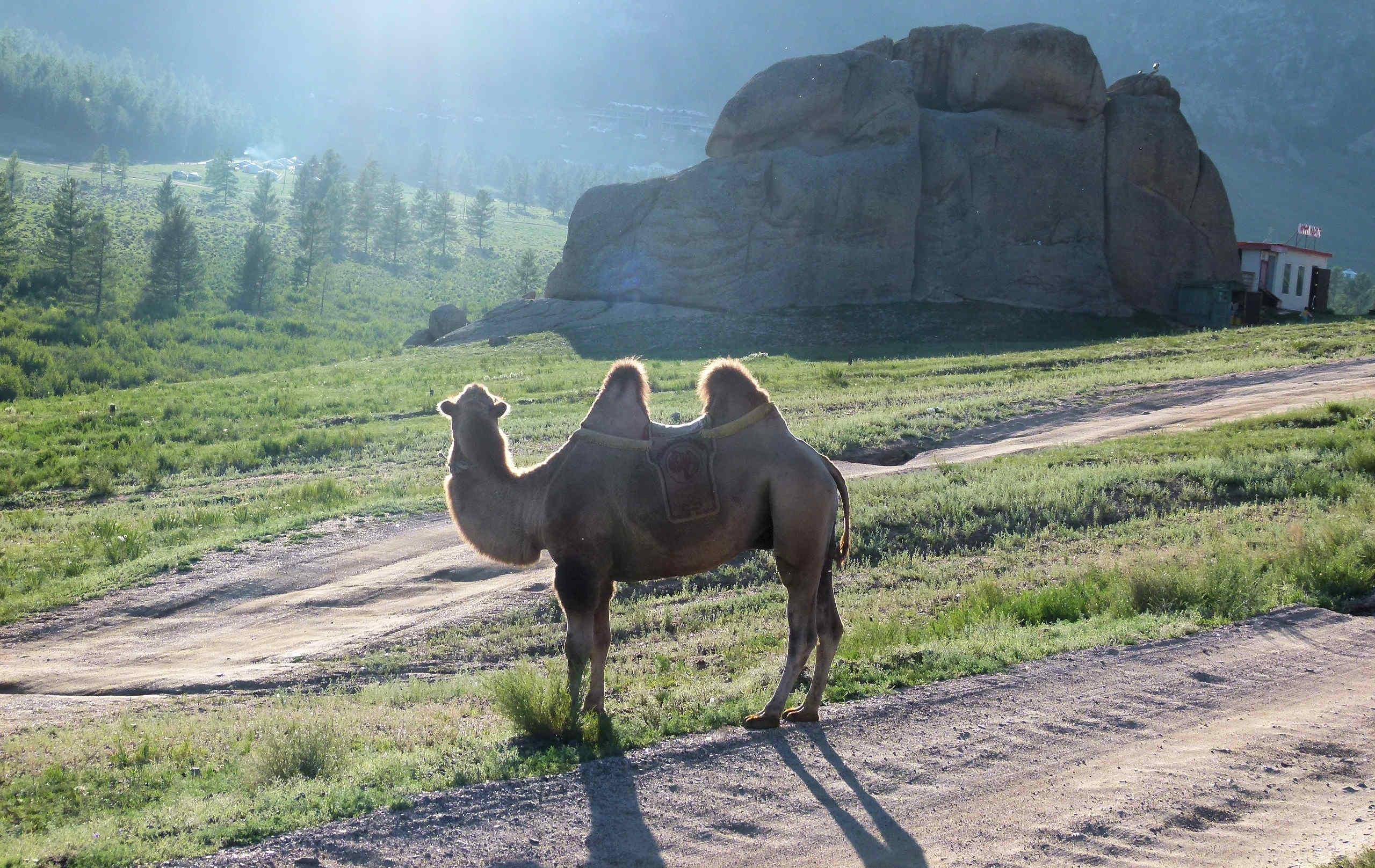 Allein in der Mongolei: der Magische Felsen - 11.Tag