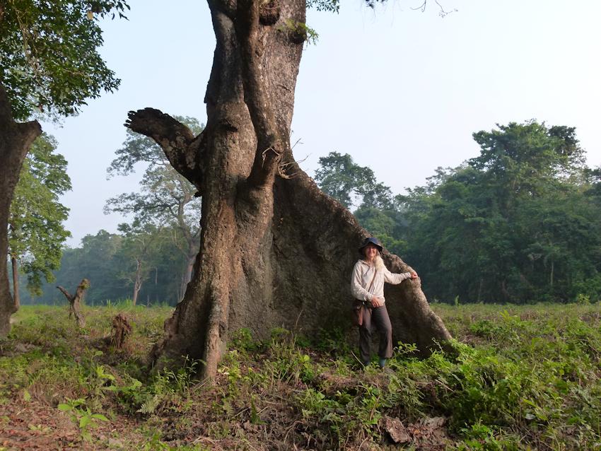 Nepal: im Dschungel des Chitwan Nationalpark