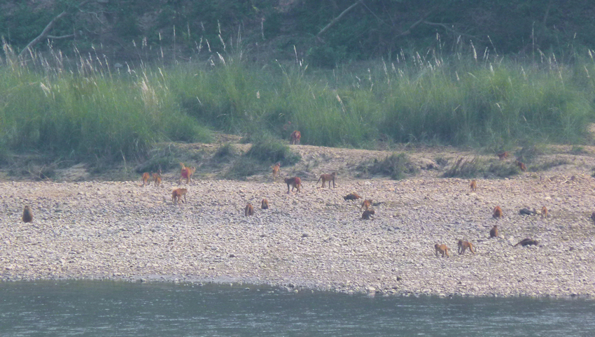 Nepal: Chitwan Nationalpark - Into the Wild