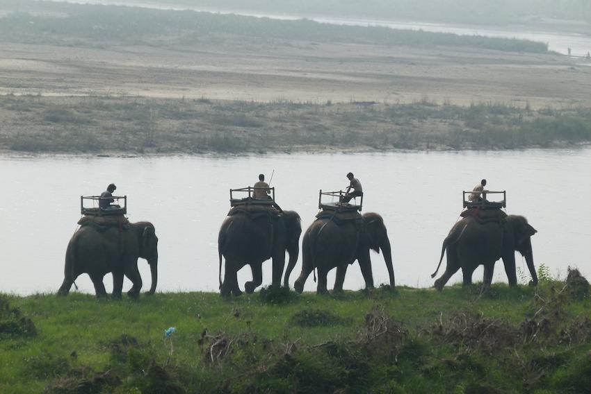 Nepal: Chitwan Nationalpark - das Rhinozeros