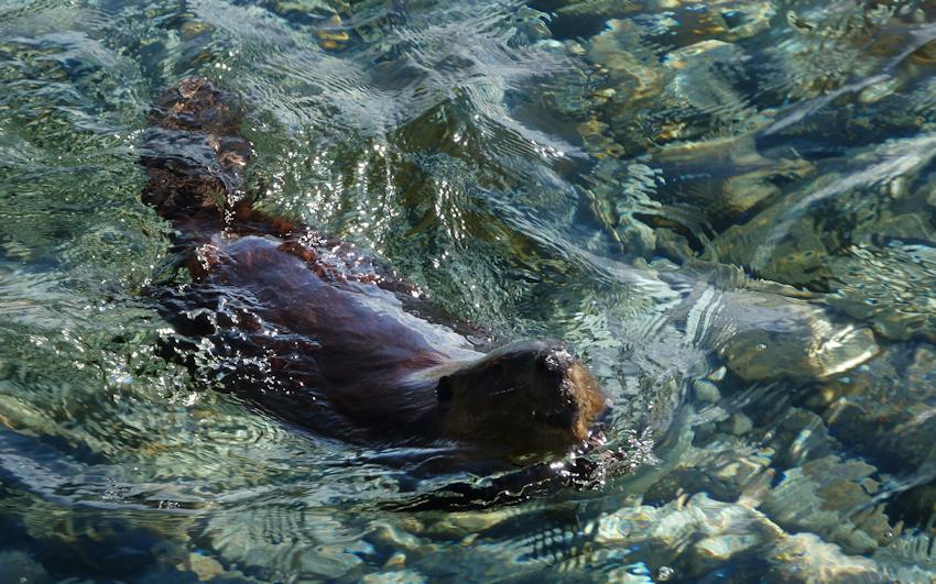 Neufundland: Orcas und Frühstück am Strand