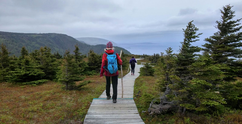 Neufundland: Elche im Cape Breton Highlands Nationalpark