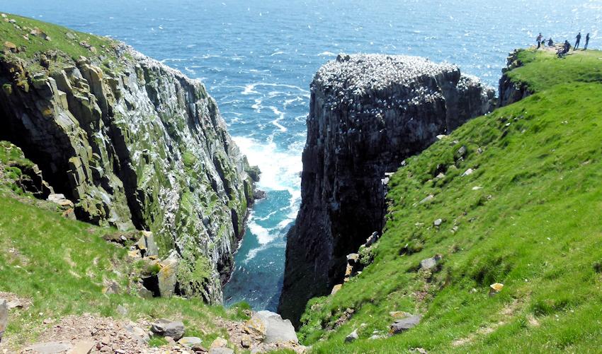 Neufundland: Ein Felsen für 70 Tausend Seevögel - Cape St. Mary's