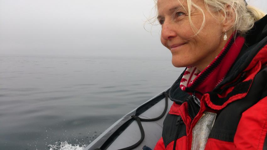 Neufundland: Whalewatching - Begegnung mit dem Minkwal