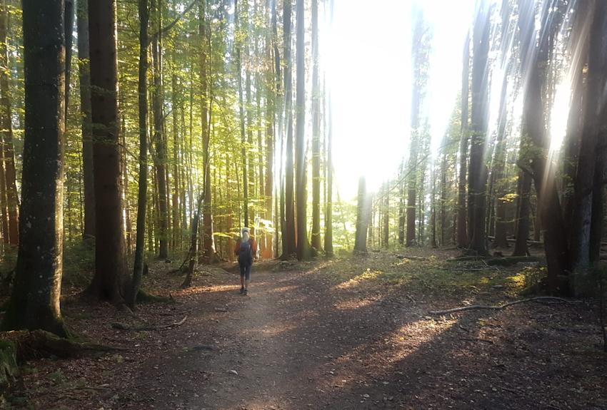 Raus in die Natur... zum Wandern, Trekking, Bushcraft oder Survivaltest?