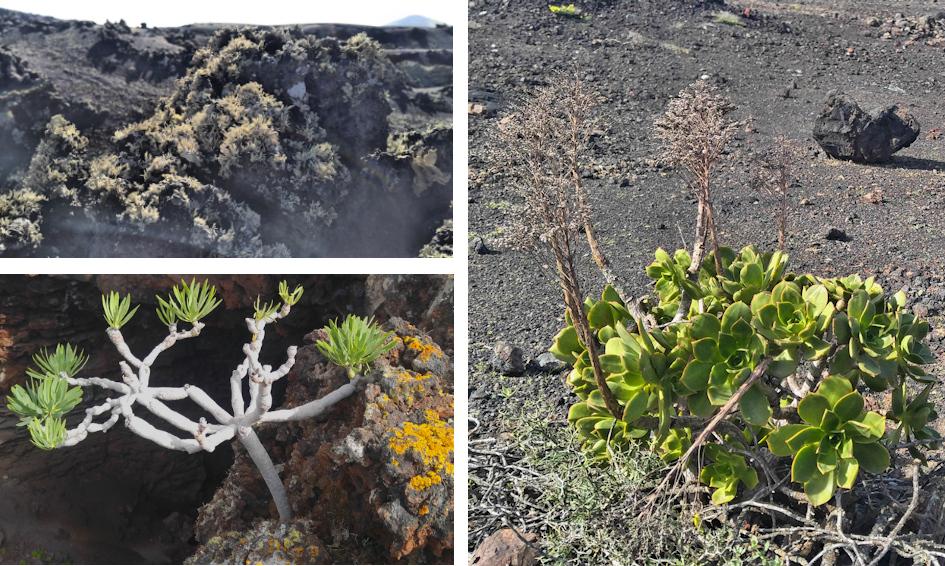 Wanderung auf Lanzarote: zum Kraterrand zweier Vulkane
