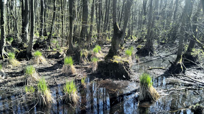 Ostseeküste Radweg: Sanddünen und Urwald am Darßer Ort