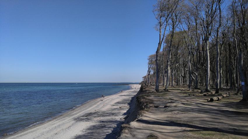Ostseeküste Radweg: Rerik - Warnemünde, Gespensterwald Nienhagen