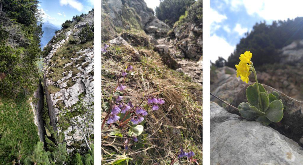 Latschenkopf und Achselköpfe Spannende Zweitagestour: Benediktenwand von Lenggries