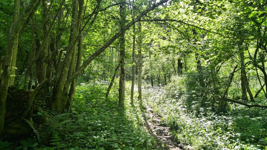 Wanderung ohne Auto: einsam und idyllisch auf den Rehleitenkopf