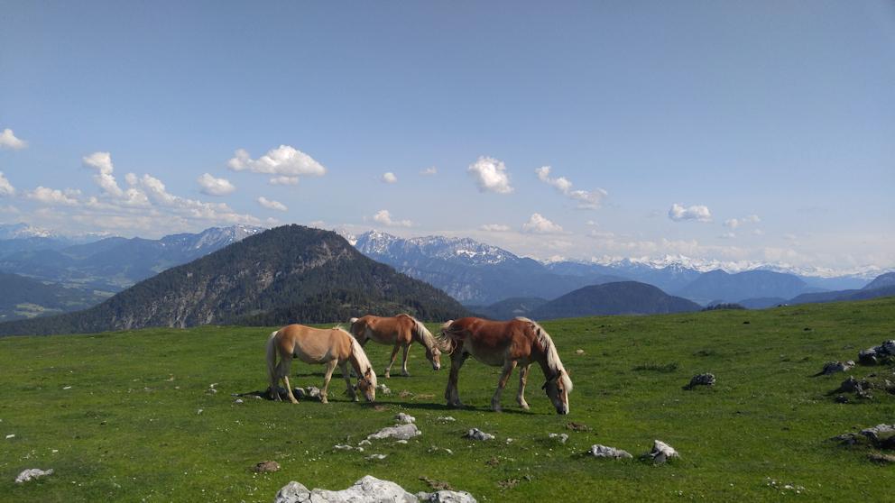 Pferde auf der Alm vor großartiger Bergkulisse