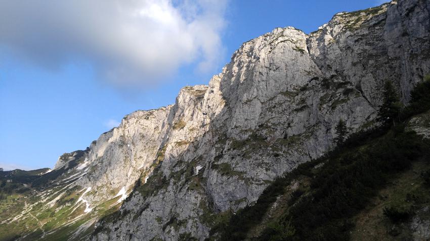 Steinbock Treffen am Fuß der Benediktenwand