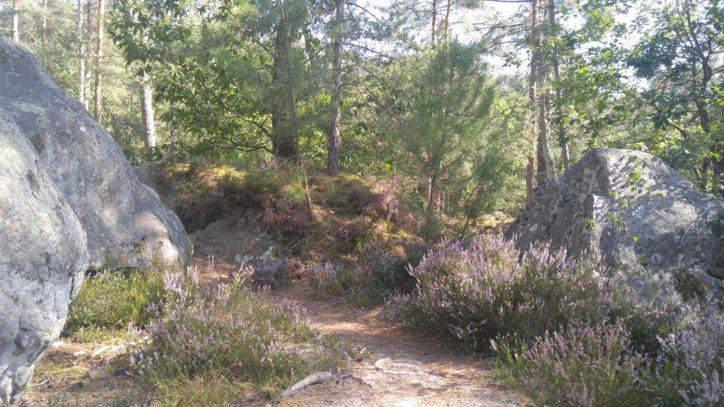 Zauberwald von Fontainebleau