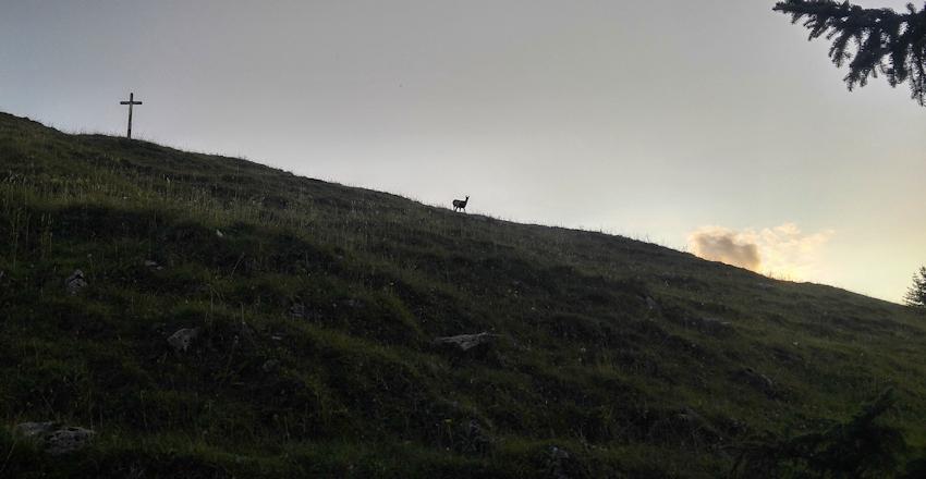 Gams am Gipfelkreuz der Kirchwand