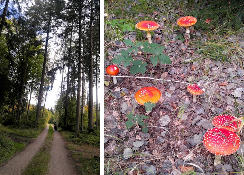 Waldwege mit Fliegenpilzen