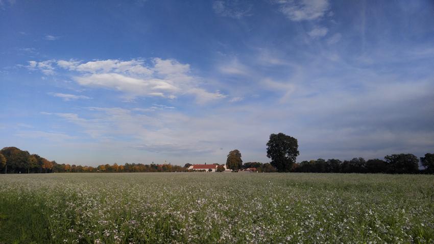 Rapsfeld vor Stiftung Ecksberg