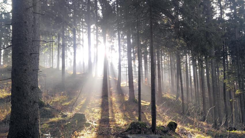 Wanderung ohne Auto: mystische Steine am Wildbarren