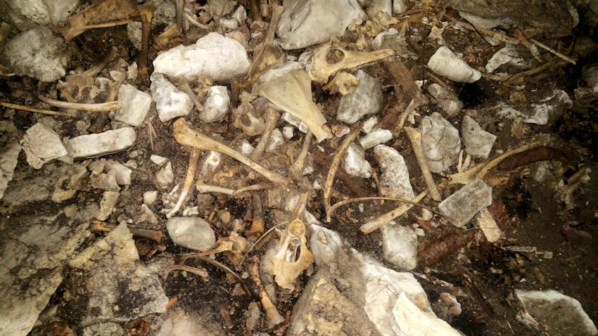 Knochen in der Wildbarren Höhle