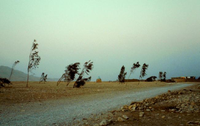 Pflanzprojekt in der Wüste