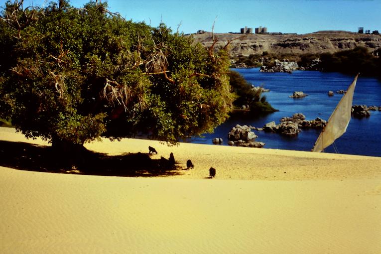 Feigenbaum Bucht am Nil mit Felukka