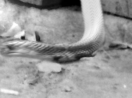 Abenteuer Ägypten: Schlange, Skorpion und Co.