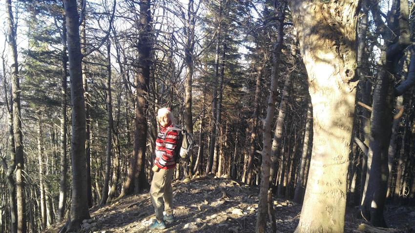 Abstieg durch den Buchen-Bergwald
