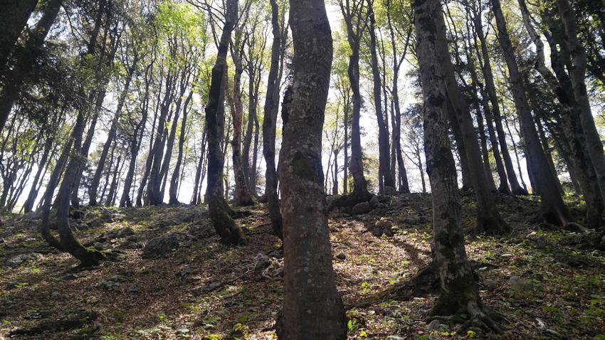 Alte Wege von Marquartstein auf die Hochplatte