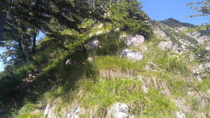 Blick zum Gipfel der Brecherspitz