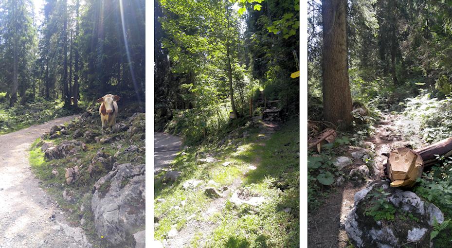 Aufstieg zur Hochries auf der Wanderung von Aschau über den Laubenstein