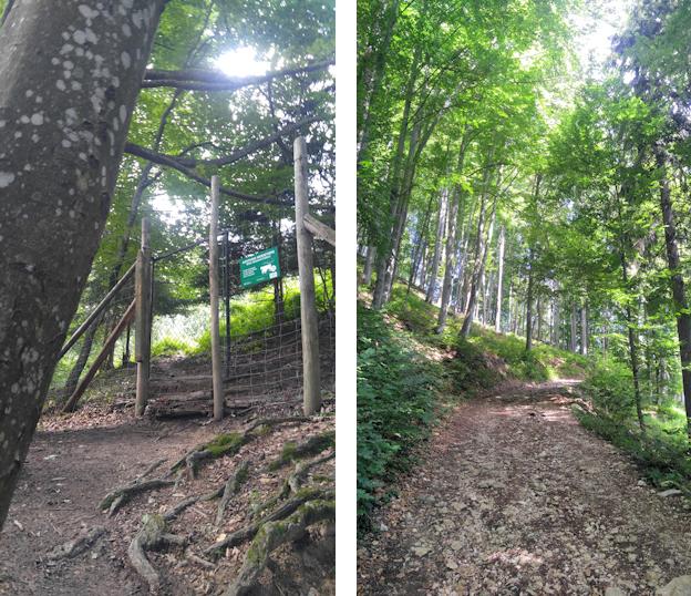 Aufstieg von Aschau zum Laubenstein