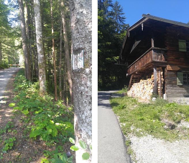 Aufstieg von der Rottach zum Blankenstein