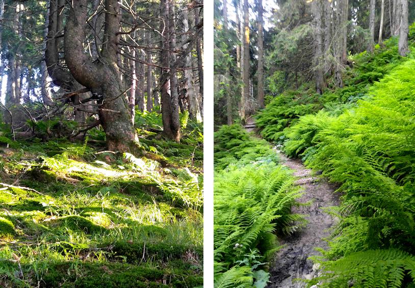 Märchenwald am Feichteck