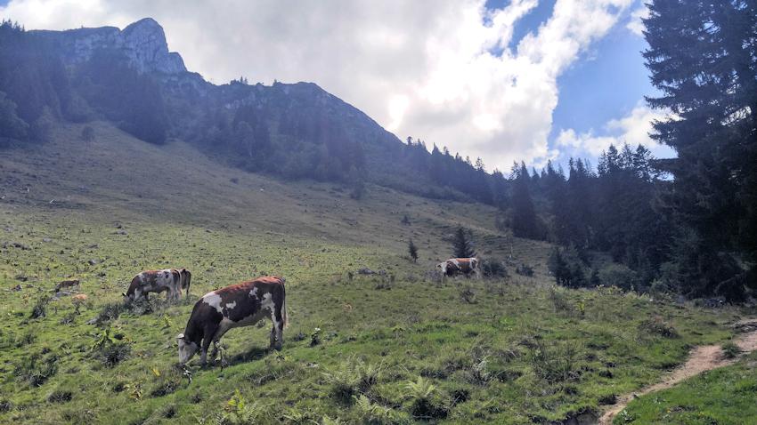Von der Buchsteinhütte zur Tegernseer Hütte am Roß- und Buchstein